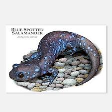 Blue-Spotted Salamander Postcards (Package of 8)