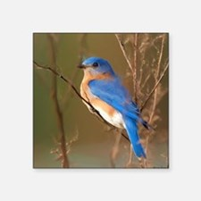 Bluebird Sticker