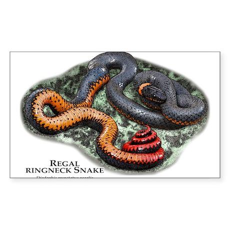 Regal Ringneck Snake Sticker (Rectangle)