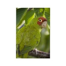 Parrot Rectangle Magnet