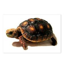 Cute Tortoise Postcards (Package of 8)