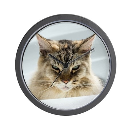Best Food For Maine Coon Uk