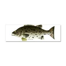 Giant Black Sea Bass fish Car Magnet 10 x 3