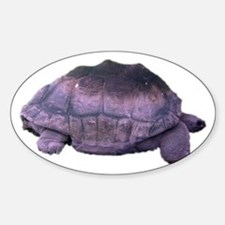 land tortoise Oval Decal