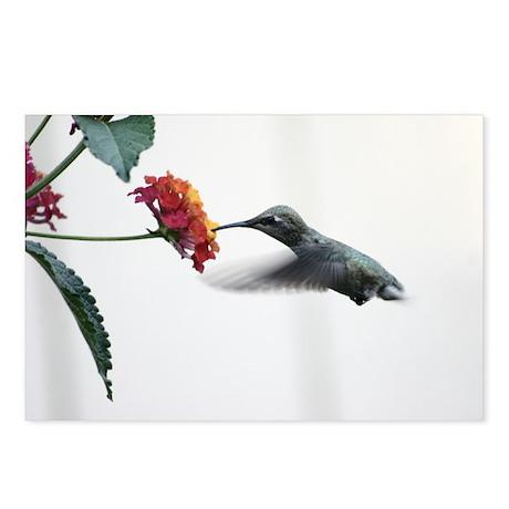 Humminbird in Flight Postcards (Package of 8)
