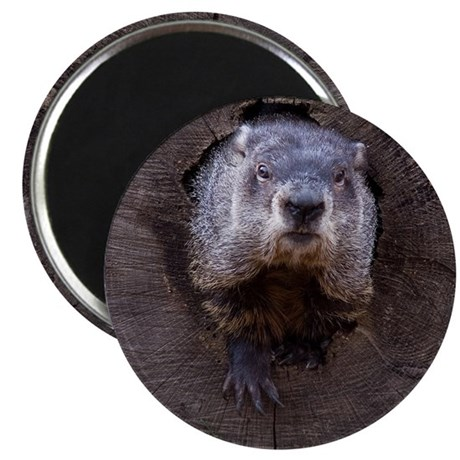 "Groundhog 2.25"" Magnet (10 pack)"