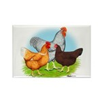 All American Trio Rectangle Magnet (100 pack)