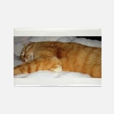 Orange Cat on His Day Off Rectangle Magnet