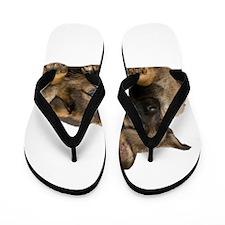 German Shepherd Siblings Flip Flops