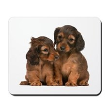 Longhaired Dachshund Siblings Mousepad