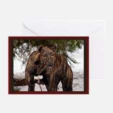 Red Brindle Photo Greeting Cards (Pk of 10)