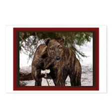 Red Brindle Photo Postcards (Package of 8)