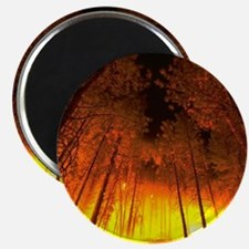 Forest Fire Magnet