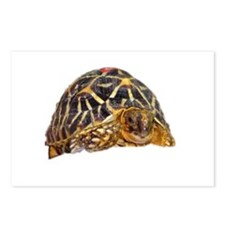 star tortoise Postcards (Package of 8)