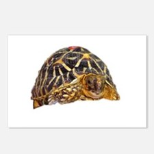 star tortoise Postcards (Package of 8)