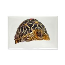 star tortoise Rectangle Magnet