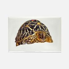 star tortoise Rectangle Magnet