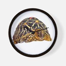 star tortoise Wall Clock