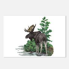 Bull moose art Postcards (Package of 8)