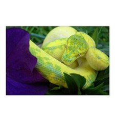 High Yellow Green Tree Python Postcards (Package o
