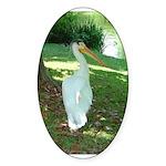 pelican Oval Sticker
