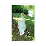 pelican Rectangle Sticker