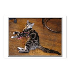 Ashley displays cattitude Postcards (Package of 8)