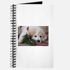 Pyr Pup -- Journal