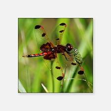 ELISA SKIMMER Dragonfly Sticker