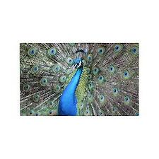 Proud as a Peacock 3'x5' Area Rug