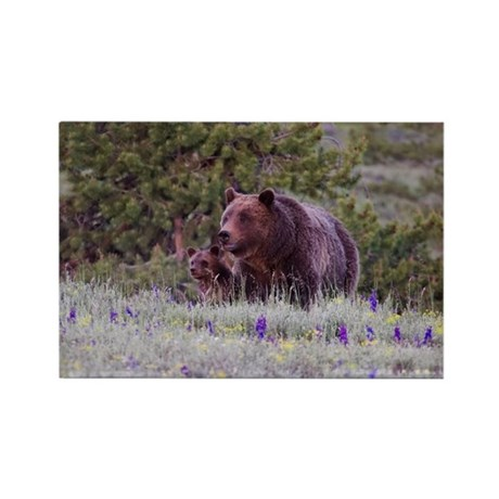 Grizzly Bear 399 Triplet Cubs Rectangle Magnet