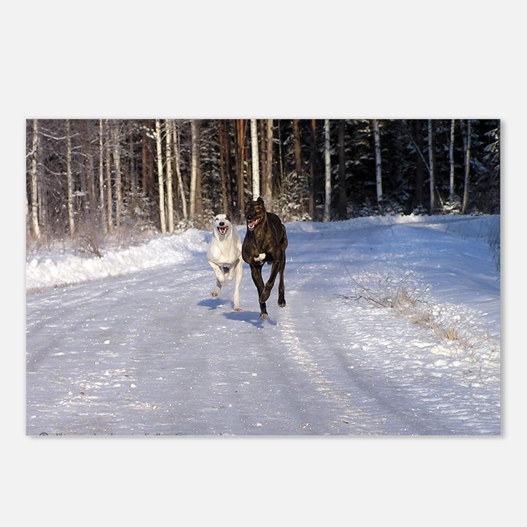 Racing Snow Hounds Postcards (Package of 8)