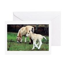 Foal Greeting Cards (Pk of 10)