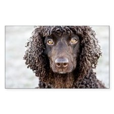 Irish Water Spaniel Decal