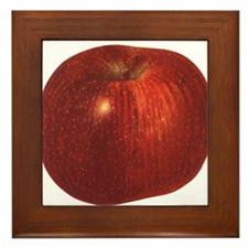 Vintage Food, Red Delicious Organic Apple Fruit Fr