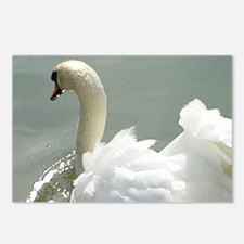 Beautiful white swan Postcards (Package of 8)