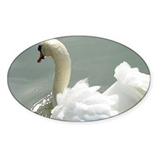 Beautiful white swan Decal