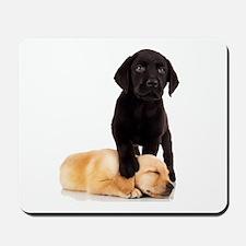 Labrador Playmates Mousepad