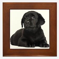 Labrador Retriever Framed Tile