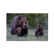 MAMMA GRIZZLY and CUBS Rectangle Magnet (10 pack)