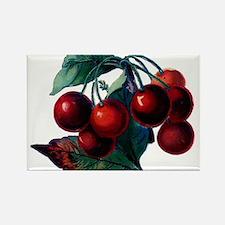 Vintage Cherry Big Red Juicy Cherries Fruit Rectan