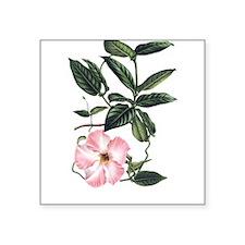 Vintage Pink Morning Glory Sticker