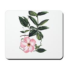Vintage Pink Morning Glory Mousepad