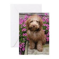 Labradoodle puppy Greeting Cards (Pk of 10)