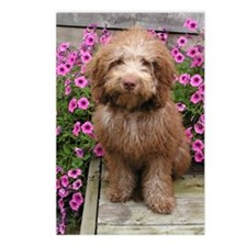 Labradoodle puppy Postcards (Package of 8)