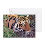 Tiger Eyes Christmas Cards (Pk of 10