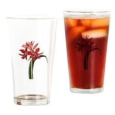 Amaryllis Aulica Drinking Glass