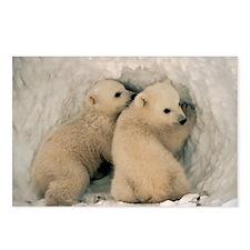 Polar Bear Cubby Postcards (Package of 8)