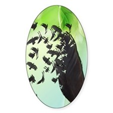 Crow Feather Green Decal