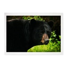 Black Bear 5'x7'Area Rug